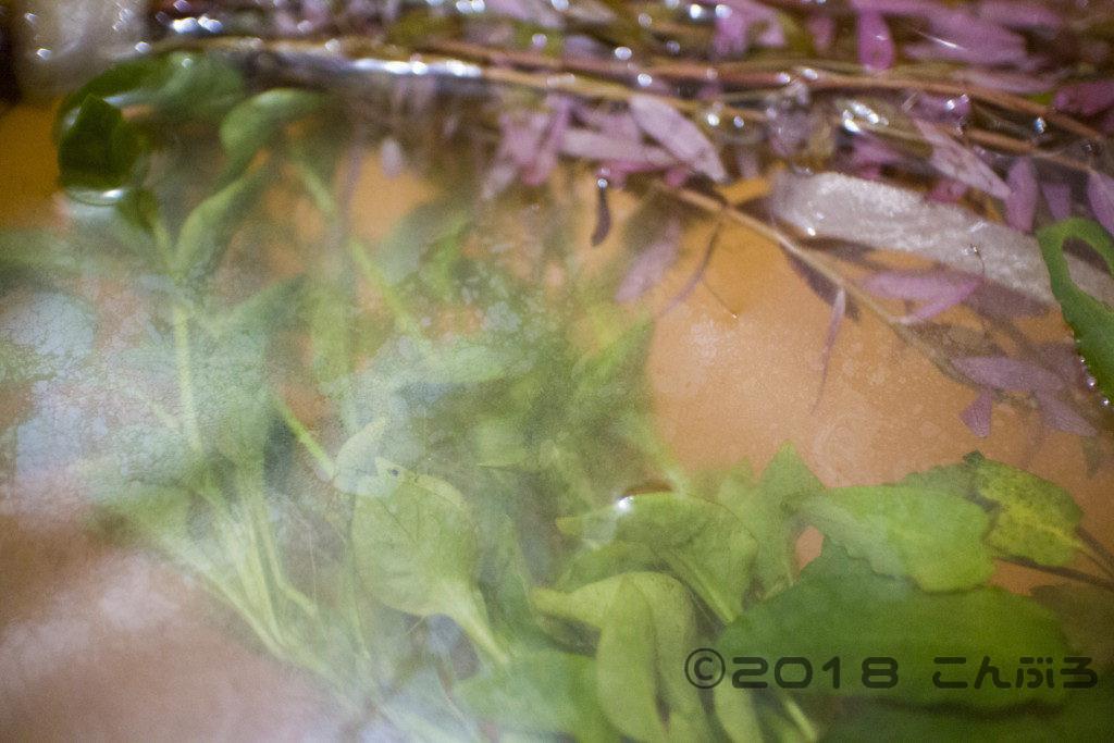 ホタテの力の農薬が浮いている状態