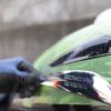 バイクのタンクロゴの取り方