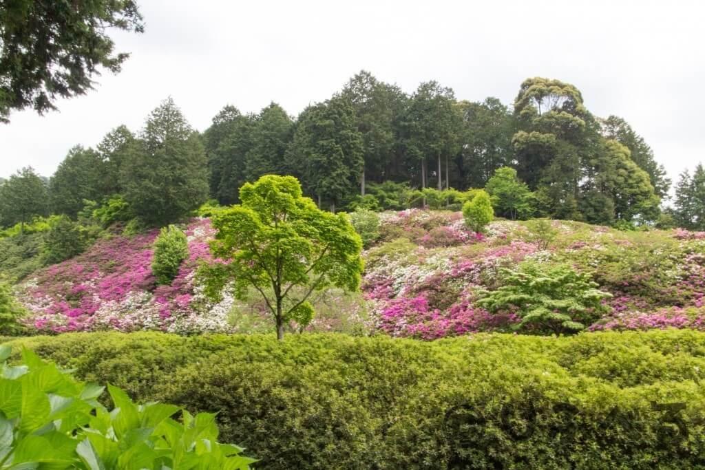 三室戸寺の庭園